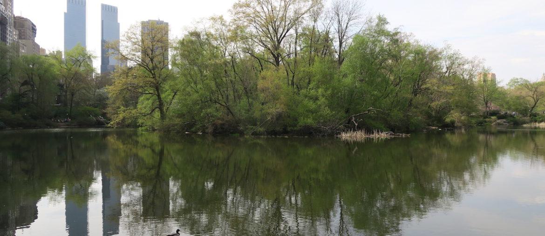 Secret Nature Sanctuary in Central Park